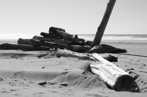 Pacific beach logs