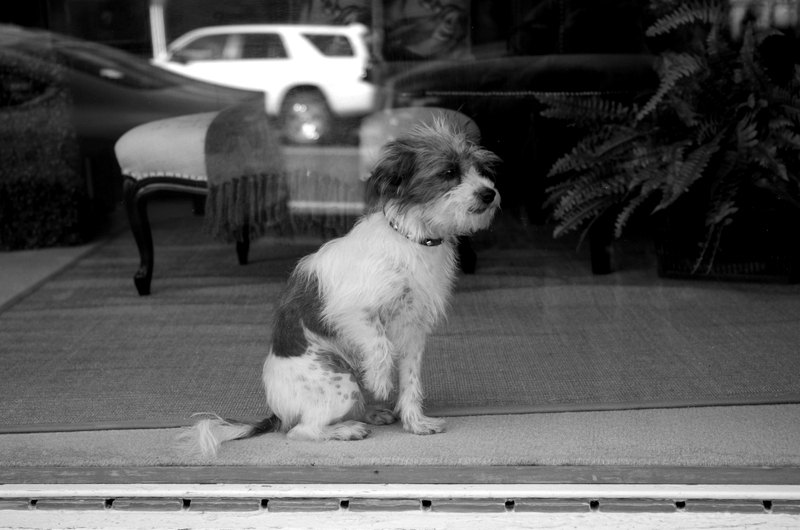 doggy in shop window - Pt Angeles