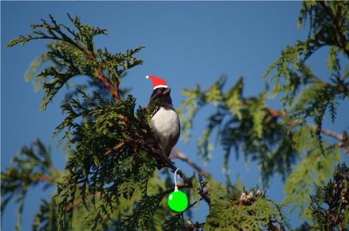 Harry the Hairy Woodpecker