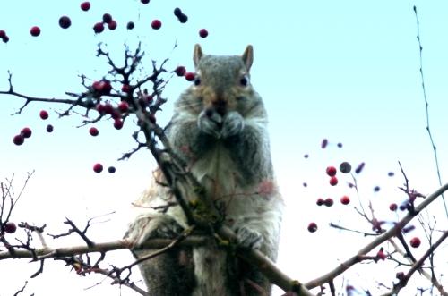 5-squirrel