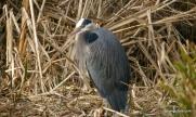 heron at 200 feet