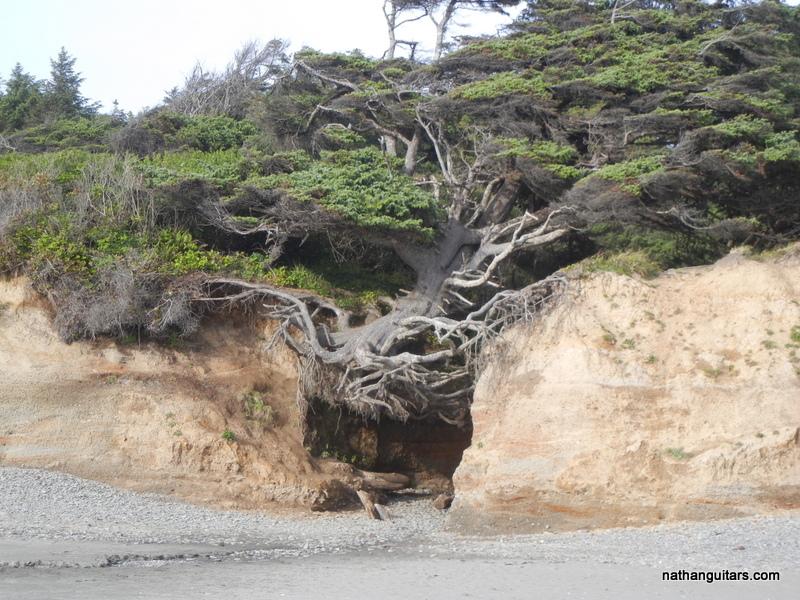 famous weird tree