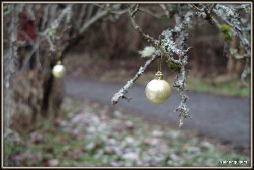 random acts of Xmas decoration in the forest