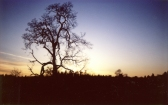 3-OAK AT SUNSET004